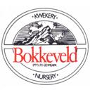 Bokkeveld_0